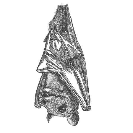 Stylized hand drawing bat. Decorative hand drawn bat. Black and white drawing by hand. Witchcraft, voodoo magic attribute. Illustration for Halloween. Vector.