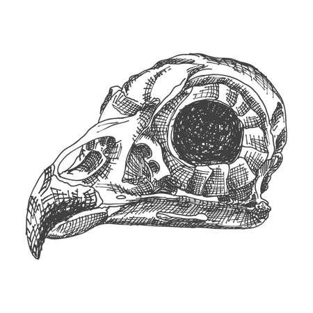 Birds skull. Hand drawing illustration for Halloween.