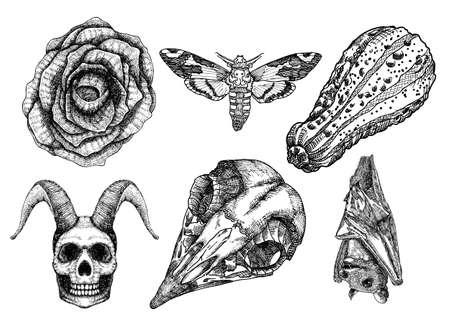 Set for Halloween. Set of witchcraft magic, occult attributes decorative elements. Moth hawk moth Human demon with horns bird skull bug insect bat pumpkin black rose. Folklore. Vector. Иллюстрация
