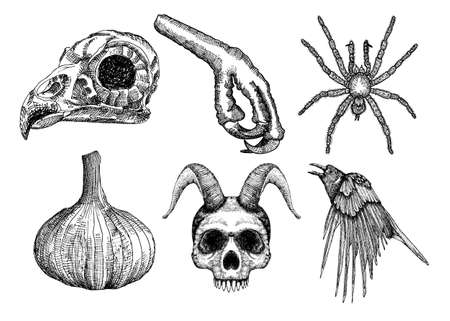 Set for Halloween. Set of witchcraft magic, occult attributes decorative elements. Human, demon with horns, bird skull bug spider insect crow garlic bird leg. Folklore attributes. Vector.