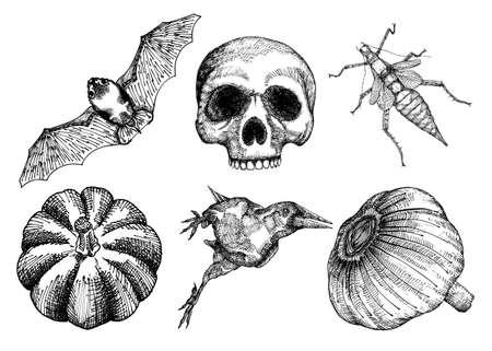 Set for Halloween. Set of witchcraft magic, occult attributes decorative elements. Human skull bu, insect crow garlic bat pumpkin. Folklore attributes. Vector.
