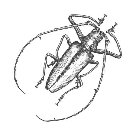 Hand drawn beetle. Black and white insect for design, icons, logo or print. Hand drawing illustration for Halloween. Vector.