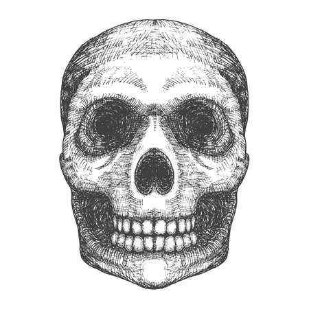 Hand drawing skull. Human skull sketch. Black and white illustration of skull with a lower jaw, hand drawn. Witchcraft magic, occult attribute decorative element. Death and mortality symbol. Vector.