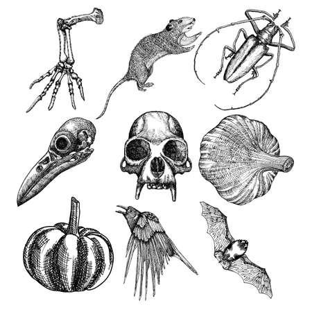 Set of witchcraft magic, occult attributes decorative elements. Monkey bird skull skeleton hand bug beetle insect crow rat frog bat pumpkin garlic. Set for Halloween. Vector.