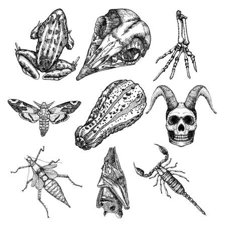 Set of witchcraft magic, occult attributes decorative elements. Human demon skulls with horns skeleton hand bug beetle insect scorpion moth frog bat pumpkin. Set for Halloween. Vector. Çizim