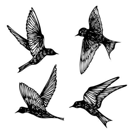 Set of birds flock, flying swallows, hand drawn textured sketch. Vector.  イラスト・ベクター素材