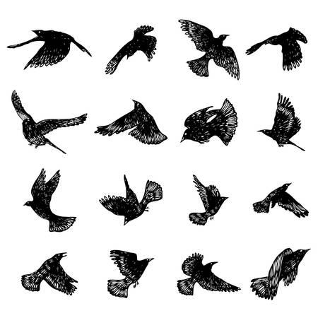 Set of birds flock. Flying crows birds. Hand drawing. Vector.