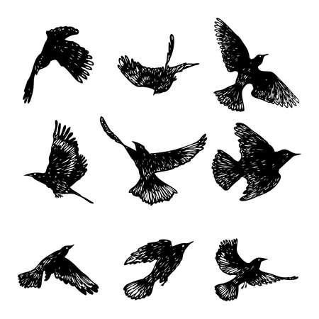 Set of black raven birds, hand drawn crows flock. Drawing sketch. Vector.