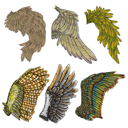 Set of colorful bird wings of different shape in open position isolated. Collection of colourful illustrations with angel wings. Freehand drawing. Hand drawing tattoo vintage body art concept vector. Çizim