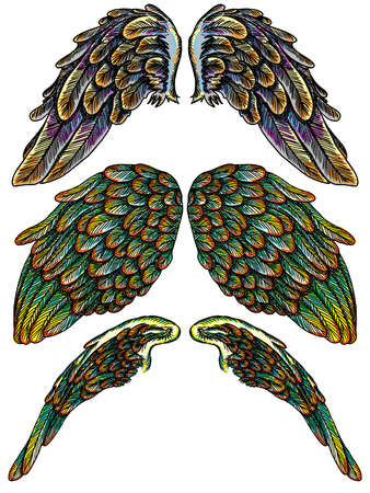Set of colourful bird wings of different shape in open position isolated on white background. Colorful angel wings hand drawing sketch. Hipster tattoo or vintage body art concept. Vector.