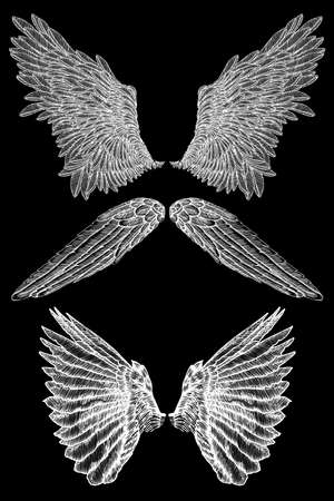 Pair of spread out eagle, falcon, hawk bird wings of different shape. Set of angel wings. Vector. Ilustração