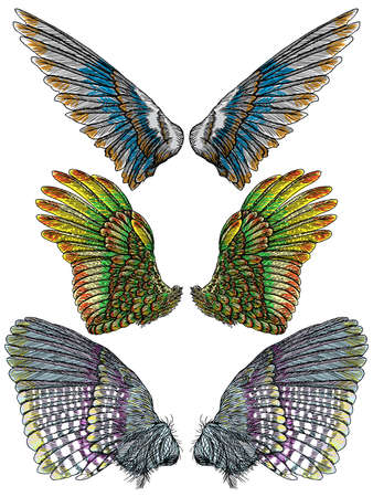 Set of colorful bird wings of different shape in open position isolated. Collection of colourful illustrations with angel wings. Freehand drawing. Hand drawing tattoo vintage body art concept vector. Ilustracja