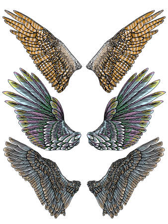 Set of colorful bird wings of different shape in open position isolated. Collection of colourful illustrations with angel wings. Freehand drawing. Hand drawing tattoo vintage body art concept vector. Illustration