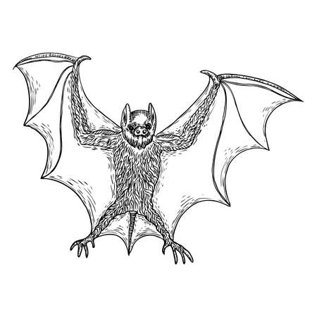 Bat with open wings drawing. Gothic illustration of monsters for the Halloween. Witchcraft magic, occult attributes decorative elements. Drawing of night creatures. Flying vampire. Vector.