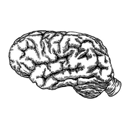 Hand drawn illustration of a human brain in black white ink. Vector.