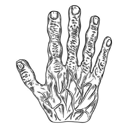 Scary zombie monster hand, hand drawn. Isolated on white background, for Halloween. Vector. Ilustração