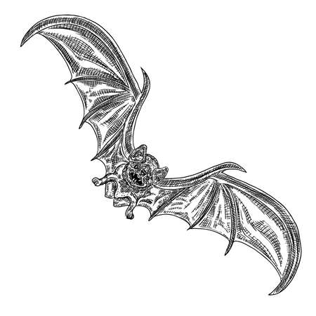 Bat with open wings drawing. Gothic illustration of monsters for the Halloween. Witchcraft magic, occult attributes decorative elements. Drawing of night creatures. Flying vampire. Vector.  イラスト・ベクター素材