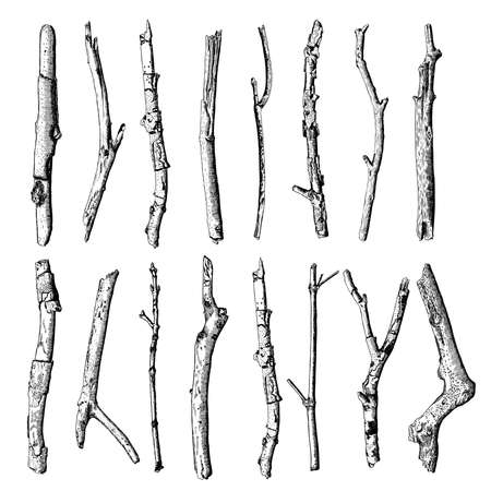 Set of detailed and precise ink drawing of wood twigs, forest collection, natural tree branches, sticks, hand drawn driftwoods forest pickups bundle. Rustic design, classic drawing elements. Vector.  イラスト・ベクター素材