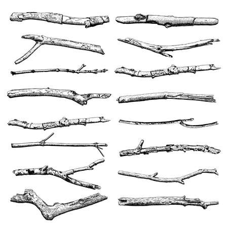 Set of Driftwood, ground floor hand drawn ink rustic design elements collection. Dry tree branches and wooden twigs. Vintage highly detailed classic ink drawings bundle art in engraved style. Vector. Illustration