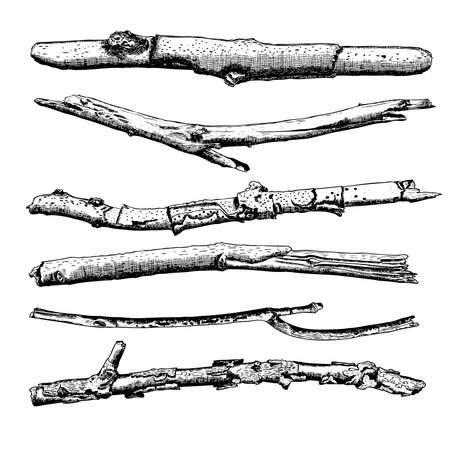 Set of Driftwood, ground floor hand drawn ink rustic design elements collection. Dry tree branches and wooden twigs. Vintage highly detailed classic ink drawings bundle art in engraved style. Vector. Standard-Bild - 124023906