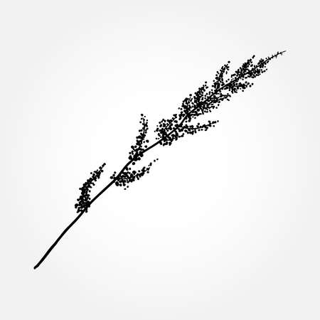 Hand drawn herbal plants or wild grass, sketch of wild flowers and cereal herbs, botanical drawing of floral elements. Vector. Ilustração
