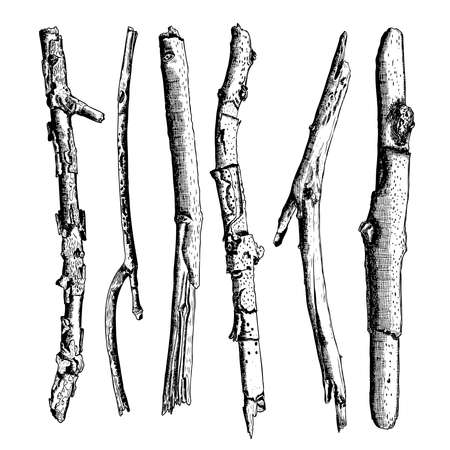 Set of detailed and precise ink drawing of wood twigs, forest collection, natural tree branches, sticks, hand drawn driftwoods forest pickups bundle. Rustic design, classic drawing elements. Vector. Standard-Bild - 124023912