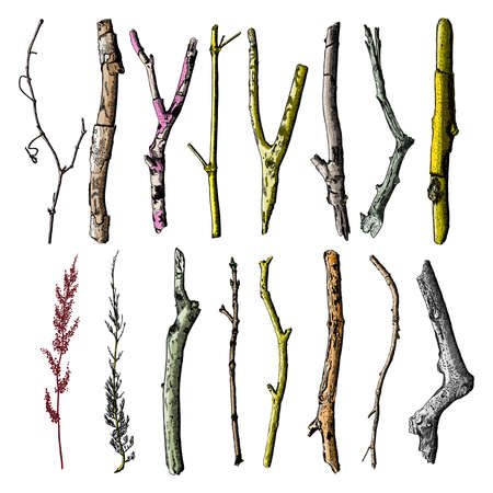 Hand painted wood twig set, ink rustic design elements collection. Dry wood tree branch and wooden twig bundle. Detailed and precise watercolor imitation driftwood twigs set. Vector. Vettoriali