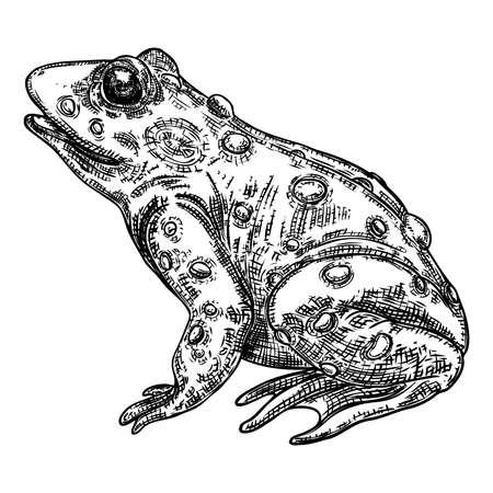 Abbildung der Froschlinie. Anuran oder Giftkröte Handzeichnung. Schwarz-weiß gezeichnete Hexerei, Voodoo-Magieattribut. Abbildung für Halloween. Vektor.