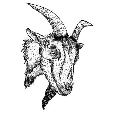 Cabeza de animal de granja de cabra o oveja con cuernos. Boceto en blanco y negro. Vector