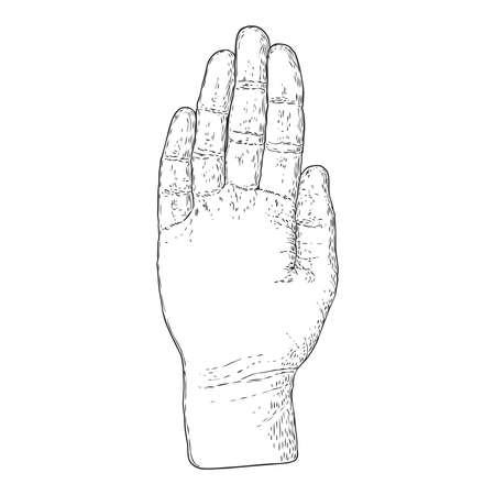 Hand on a white background for palm reading design. Hand drawn. Vector.