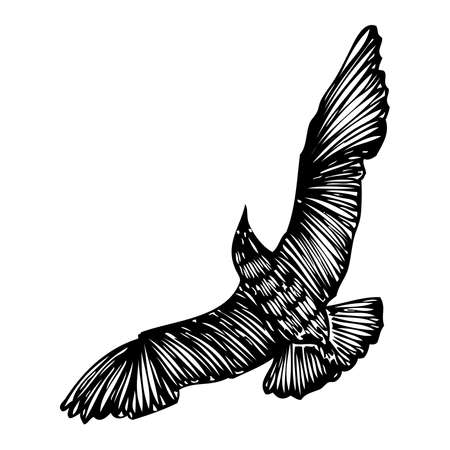 Black seagull, hand drawn strokes marine sea gull bird. Drawing sketch. Inspirational body flash tattoo ink for sailor. Nautical vector. Illustration