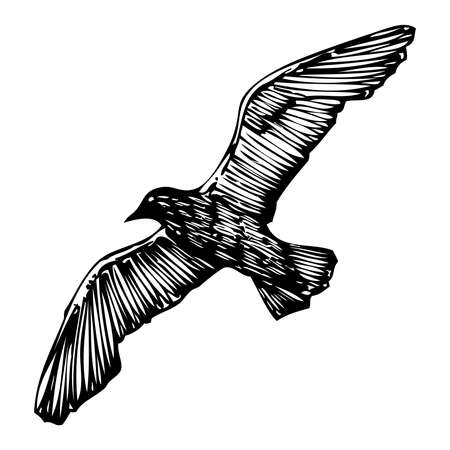Seagulls bird, nautical sailor tattoo sketch. Black stroke of flying sea gull silhouette on white background. Marine drawings shape of water bird in vector. Illustration