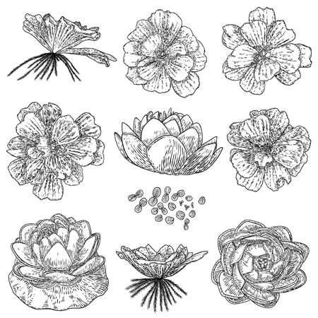 Set of lotuses, line art stylized. Collection of lotus flowers blooms. Black white, hand drawn isolated water pond lily floral. Body and mind designs elements. Vector.