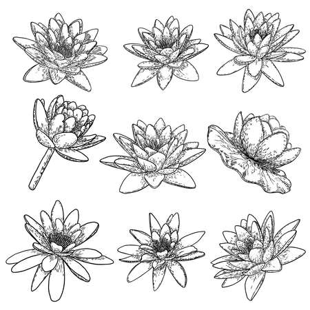 Lotus flowers. Floral botanical water lily flowers set. Isolated blooming pond wildflowers. Collection of lotus flowers for spiritual body and mind designs, spa, meditation, religion, yoga. Vector.