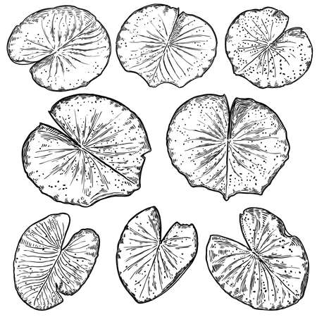 Set of lotus leafs, isolated. Drawing of water lily leaves. Vector.