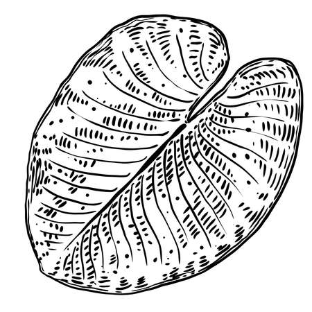 Lotus leaf, isolated. Drawing of water lily leaf. Vector.