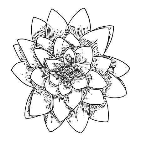 Lotus bud, line art stylized. Lotus flower bloom. Black white, hand drawn isolated water pond lily floral. Body and mind design element. Vector.