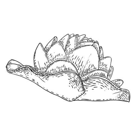 Lotus flower and leave. Sketched floral botany of water lily. Indian religion symbol of purity and enlightenment. Black white, hand drawn isolated water pond lily floral. Vector.