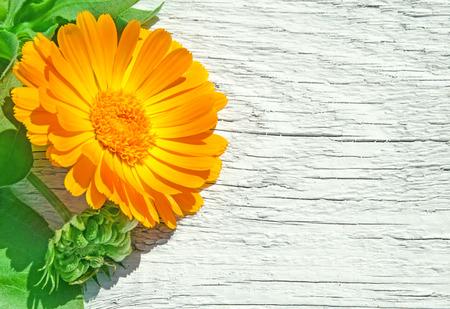 Fresh officinalis orange flowers of calendula on white wood background. Marigold. Zdjęcie Seryjne