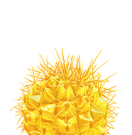 Tropical fashion creative golden cactus on white paper background. Trendy minimal pop art style.