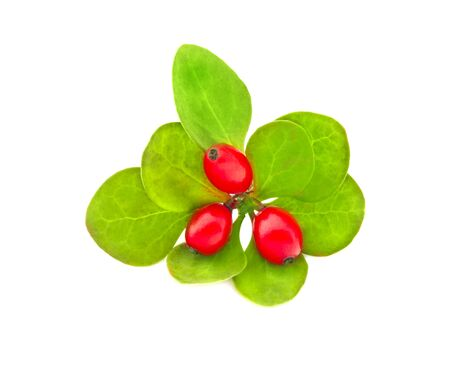 Fresh red berries barberry with green leaves isolated on a white background.