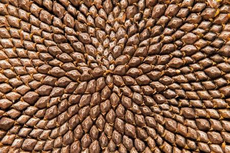 Sunflower seedheaad pattern (fibonacci) Stock Photo
