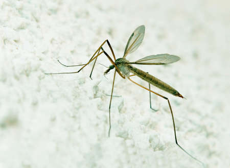 Daddy Longlegs on white wall - profile photo