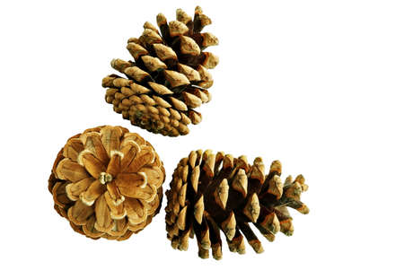 pine three: Three pine cones - isolated
