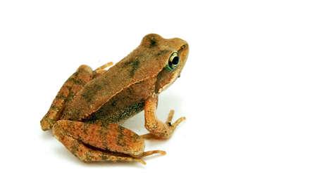 Beady eyed, baby frog, over white