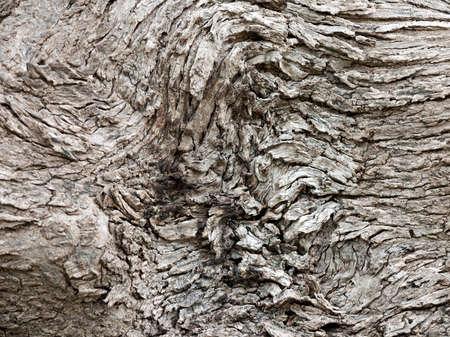 gnarled: Fondo de madera antigua blanqueada, retorcido
