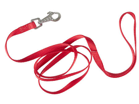 Red nylon dog lead or leash, isolated