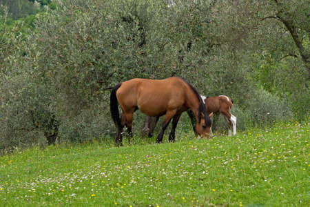 Mare and foal in olive grove photo