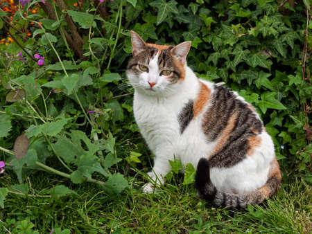 Cat in garden photo