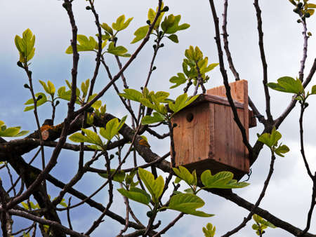 nesting: Nesting box for birds